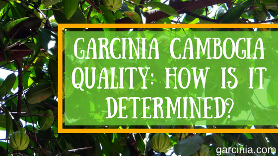 quality garcinia cambogia, how to recognize it