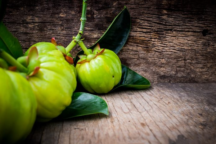 which garcinia cambogia is real
